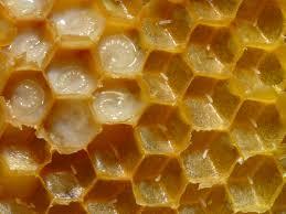 Méhpempő, egyenesen a kaptárból