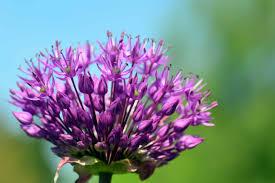 szárazságtűrő növények